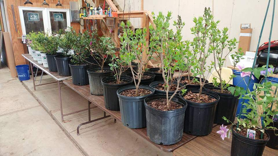Annual Tree Seedling Sale